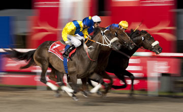 Gloria De Campeao (Tiago Pereira,farside) wins the Dubai World Cup from Lizard's Desire(near) and Allybar Meydan 27.03.2010