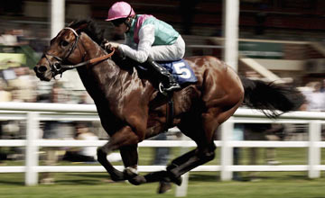 Stronghold - Lingfield May 06