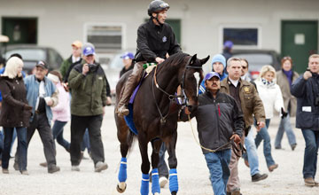 Zenyatta - Churchill Downs 03.11.10