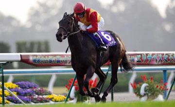 Snow Fairy winning Queen Elizabeth II Commemorative Cup Japan 14.11.2010