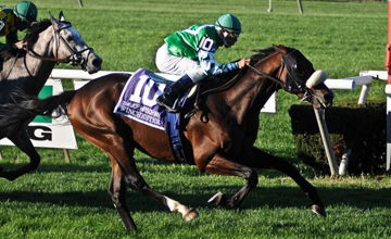 Winchester wins the Joe Hirsch Turf Classic Invitational at Belmont Park 02.10.2010