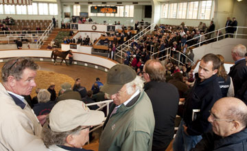 Tattersalls 05.10.10 - Lot 59 Galileo filly bought by John Magnier for 1.2m guineas