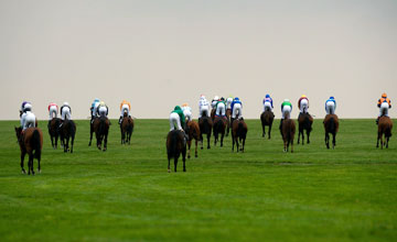 Newmarket racecourse 15.10.10