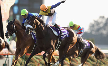 Apapane wins the Shuka Sho (G1) - Japan 17.10.2010