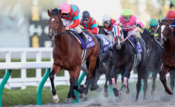 Transcend wins Japan Cup Dirt - December 2011