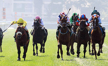 Dunaden (left) wins Hong Kong Vase - Sha Tin - 11.12.2011