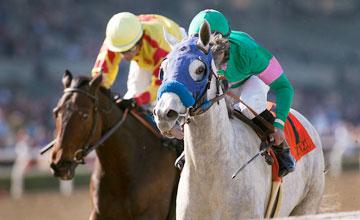 Zazu - Las Virgenes Stakes - Santa Anita Park, Arcadia CA. February 5, 2011