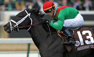 Pluck with Garrett Gomez aboard runs to victory in the Juvenile Turf during the Breeders' Cup World Championships at Churchill Downs on November 6, 2010 in Louisville, Kentucky. (Photo by Andy Lyons/Getty Images)