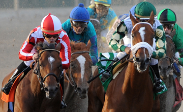 Mucho Macho Man turns into the stretch and goes on to win the Grade III Risen Star Stakes from Fair Grounds 19.02.2011
