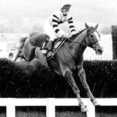 Badsworth Boy - 1985 Queen Mother Champion Chase