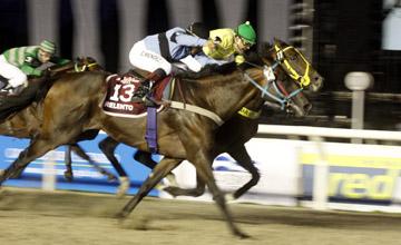maronas horse racing results today