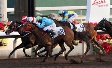 Dead-heat between Final Answer (white/red - Darren Beadman) and London China Town (blue/ Douglas Whyte) to the GOME Cup at Sha Tin, Sunday