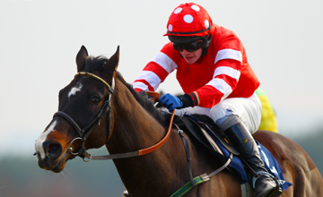 Golden Silver - Punchestown - 30.01.2011