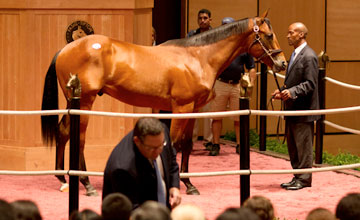 Hip 168- Harlans Holiday-Acrosstheborder sells for $310.000 at Fasig Tipton 7.12.2011