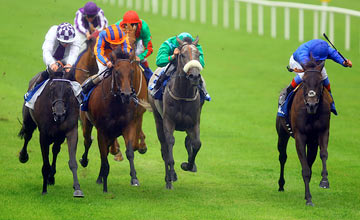 Blue Bunting - The Curragh 17.07.2011