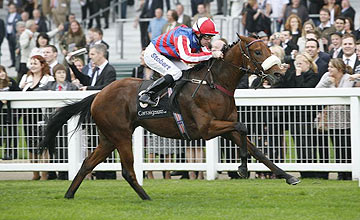 Dubawi Gold - Ascot - Oct 2010