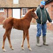 Aqlaam foal 1