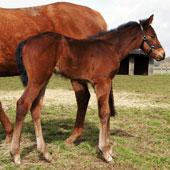 Aqlaam foal 2