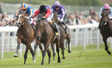 Carlton House 2nd Left Beats Seville In The Dante York 12 5 11