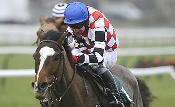 The Giant Bolster - Rodi Greene - Cheltenham