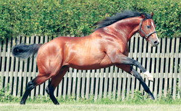 Paco Boy at Highclere Stud
