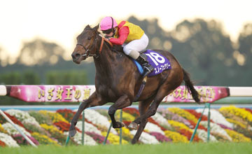 Snow Fairy Kyoto Queen Elizabeth II Cup