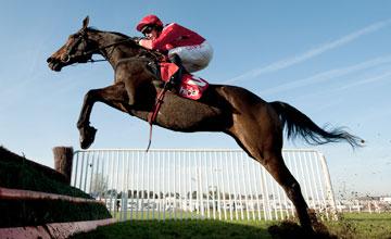 Gauvain - Cheltenham 13/11/2011