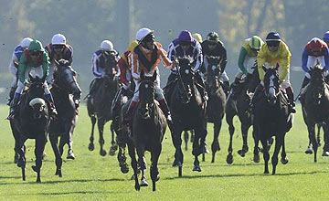 Danedream (centre) -So You Think (purple) - Arc - October 2, 2011