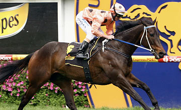 Black Caviar - Caulfield Racecourse 08.10.2011