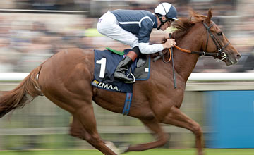 Strong Suit - Newmarket 08.10.20011