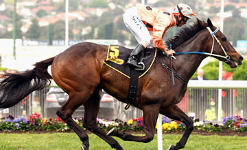 Black Caviar - Moonee Valley Racecoursef 22.10.2011