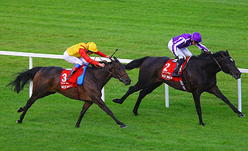 Snow Fairy (yellow) - So You Think - Irish Champion Stakes - Leopardstown - Sept 2011