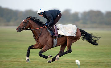 Frankel - Tom Queally on the gallops