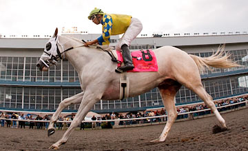 Hansen (Victor Lebron) wins the Kentucky Cup Juvenile at Turfway 9.24.2011