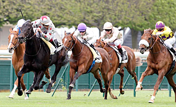 Dragon Pulse - 15/04/2012 LONGCHAMP;PARIS