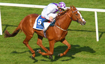 Light Heavy - Ballysax Stakes Leopardstown Photo: Patrick McCann 15.04.2012