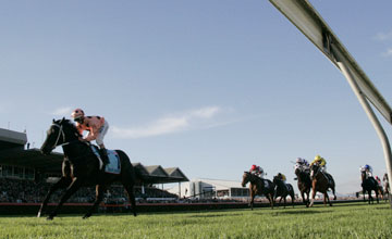 Black Caviar - ADELAIDE, AUSTRALIA - APRIL 28