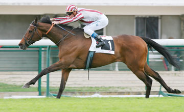 Cirrus Des Aigles