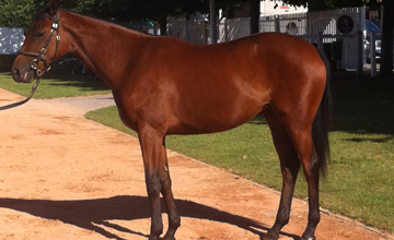 Sea The Stars x Mrs Marsh yearling filly - Deauville 2012