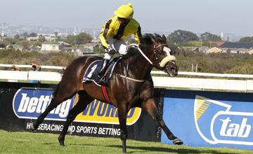 Noir Neisius - Cape Town guineas - 22/12/2012