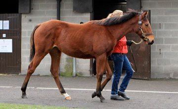 Lot 170 the half sister to Lilbourne Lad