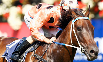 Black Caviar - Flemington - 18/02/2012