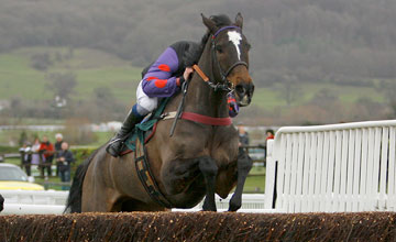 Champion Court cheltenham 01/01/2012