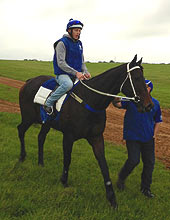 Black Caviar - Newmarket - June 2012