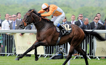 Most Improved - Royal Ascot Day 1 19.06.2012