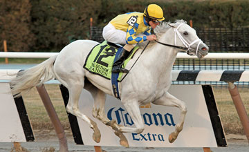 Hansen - Gotham Stakes at Aqueduct 3/3/12
