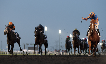 Daddy Long Legs - Meydan - 31.03.2012
