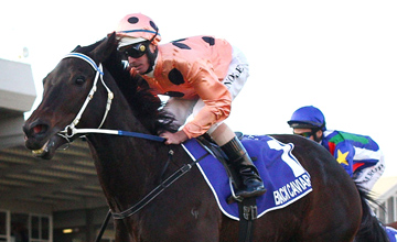 Black Caviar - Adelaide - 12/05/2012