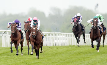 Frankel (Tom Queally) win the Lockinge - Newbury 19.5.12