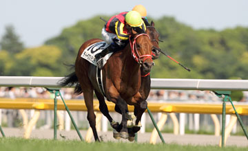 Deep Brillante - Japanese Derby - 27/05/2012